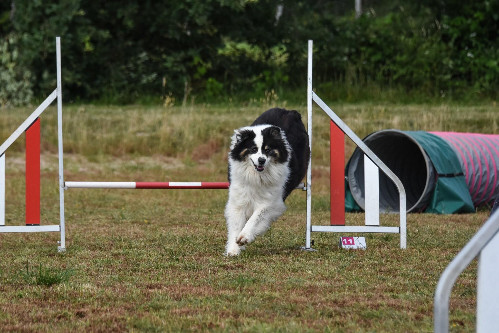 14/06/2020 Sortie Natural Dog Sport